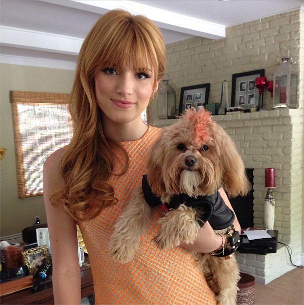 Bella Thorne Dog