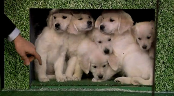 Jimmy Fallon Puppies Predict Super Bowl