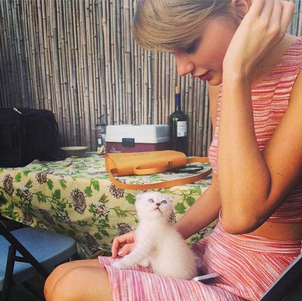Taylor Swift New Cat Olivia Benson Photo