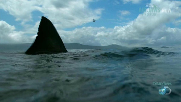 'Shark of Darkness' Fake