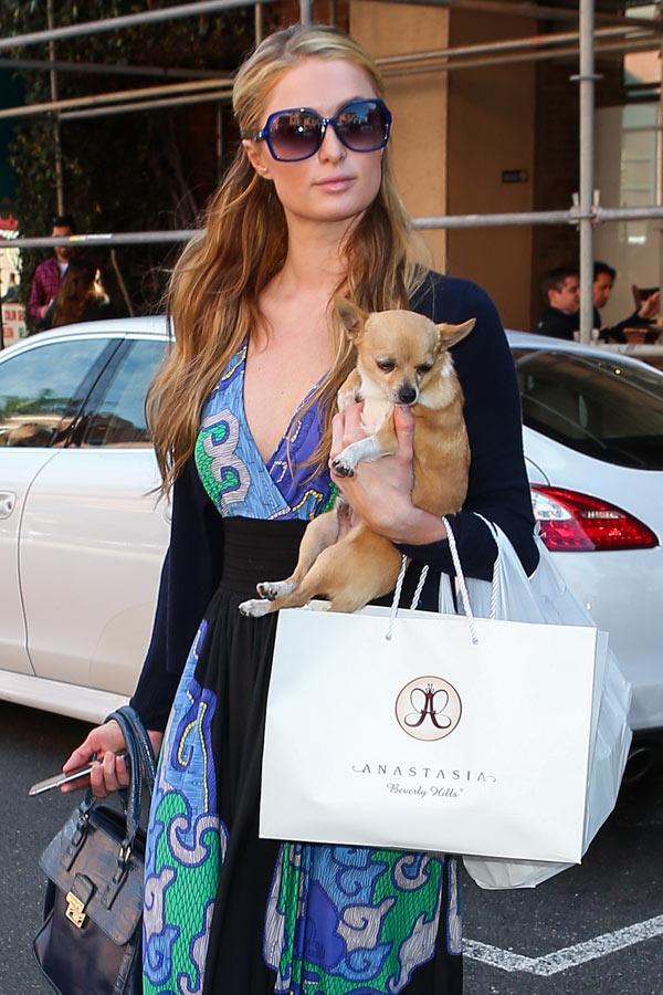 Paris Hilton Dog Dead