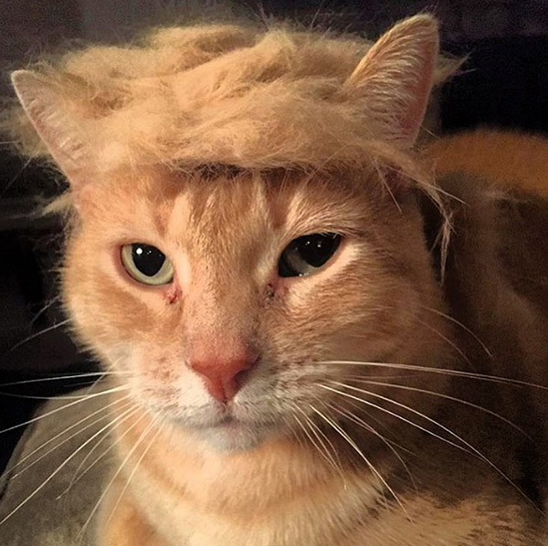 Trump Your Cat
