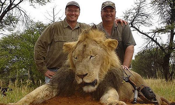 Cecil Lion Killed