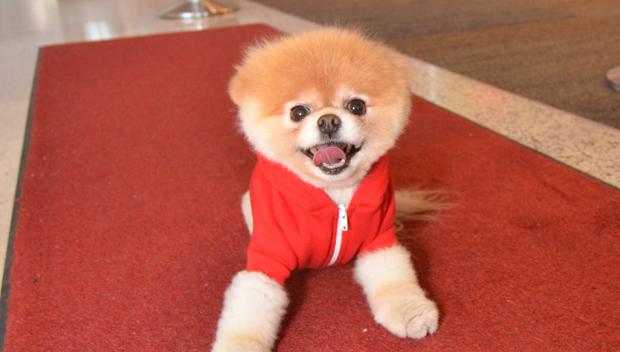 Boo The Pomeranian Dead
