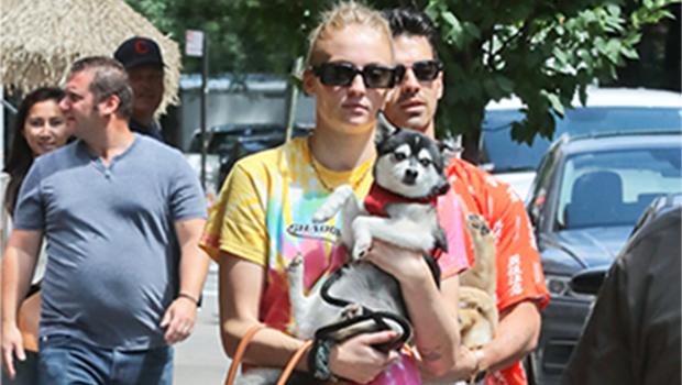 Sophie-turner-holds-dog-porky-puppy-waldo-death-pic