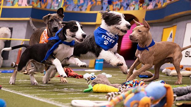 2020 Puppy Bowl