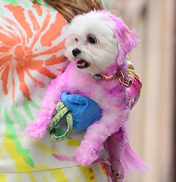 Farrah Abraham's dog