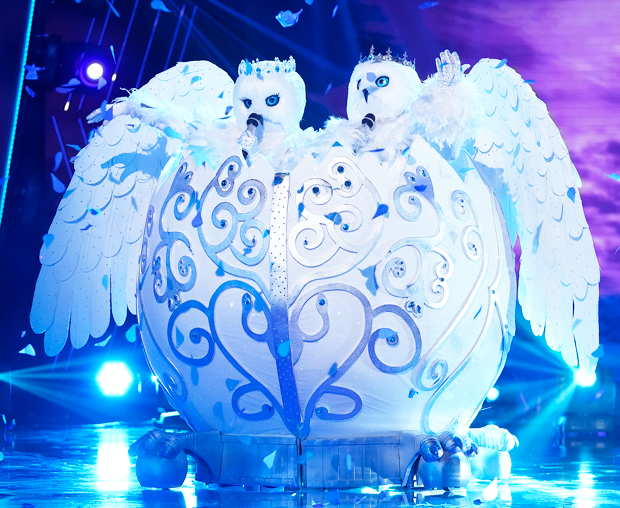 The Snow Owls