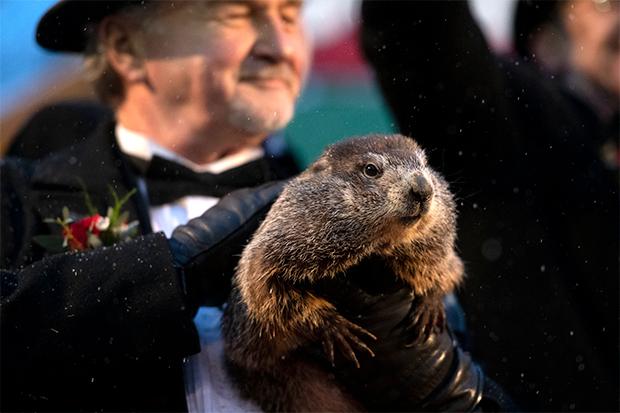 Did Groundhog See Shadow In 2021? See unxsutawney Phil's ...