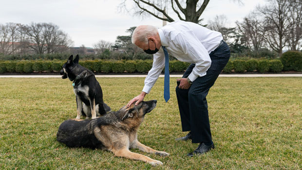 Joe Biden and his dogs