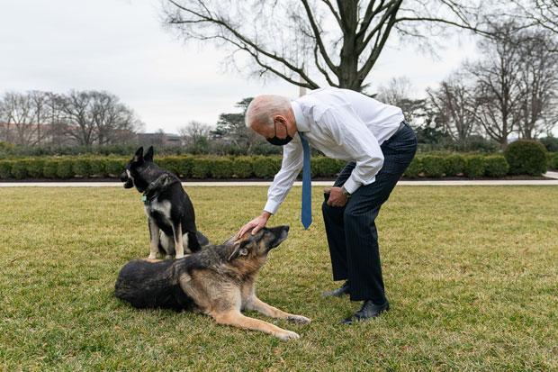 Joe Biden and dogs